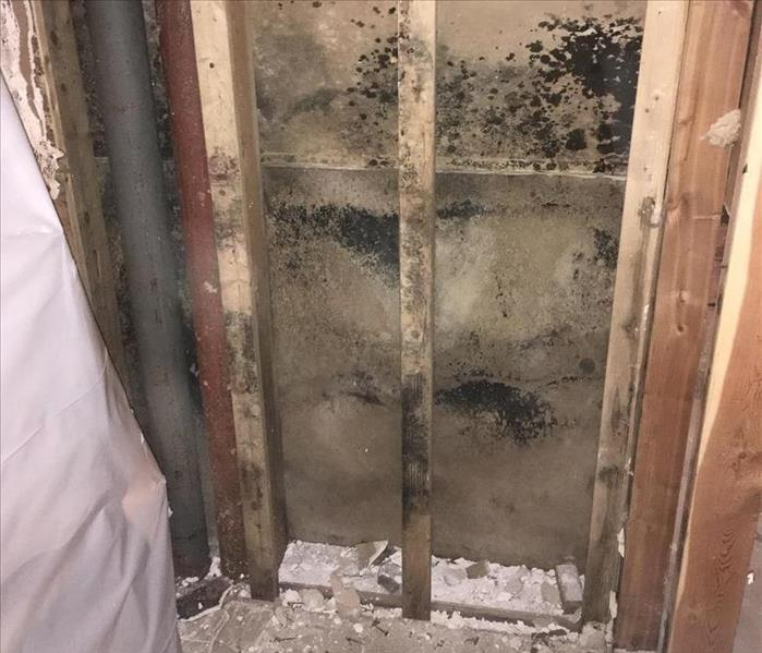 Mold Growth Found After Water Damage Before