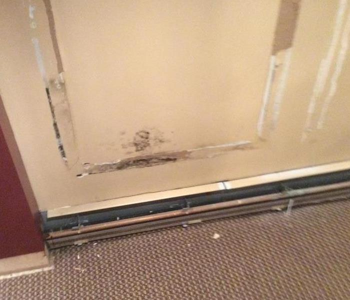 Mold Remediation How to Prevent Mold Growth After a Water Damage